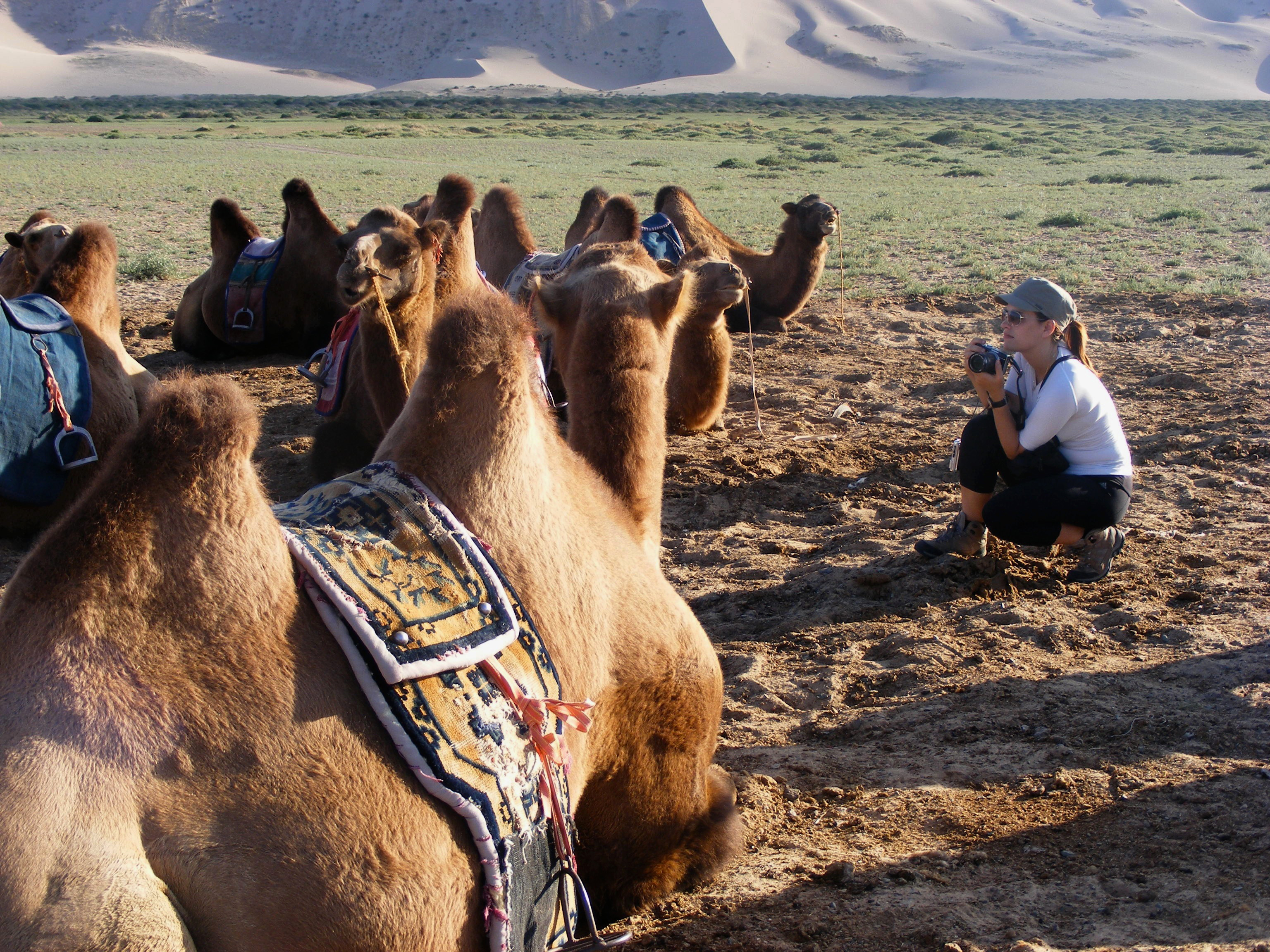 Team Weltreise und Kamele Mongolei