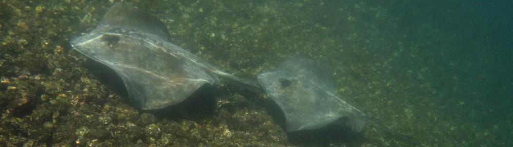 Galapagos Rochen