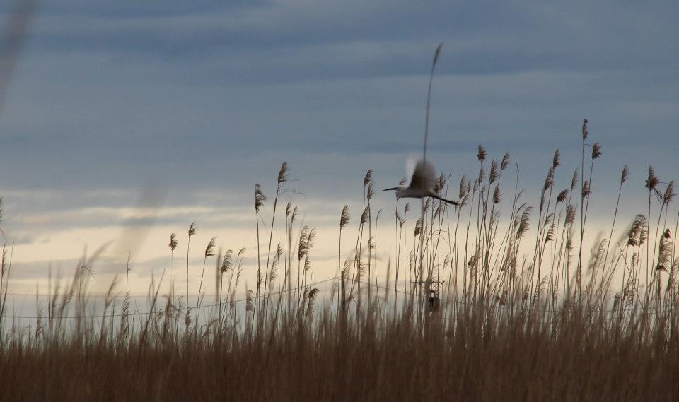 Ebro Delta Vögel
