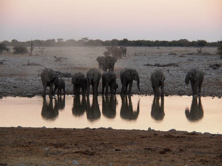 Etosha National Park Elefanten