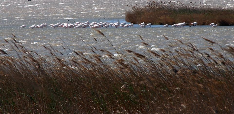 Flamingos Ebro Delte Weltreise
