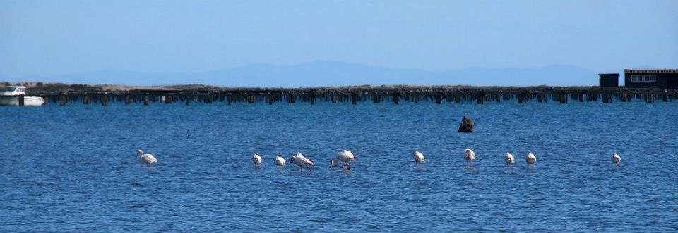 Flamingos panorama Katalonien