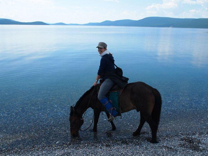 Mongolisches Pferd Aduu