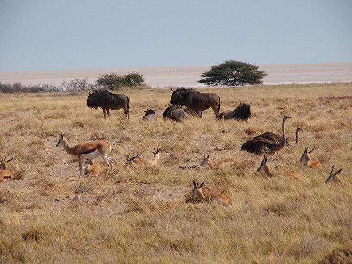 Tiere im Etosha National Park
