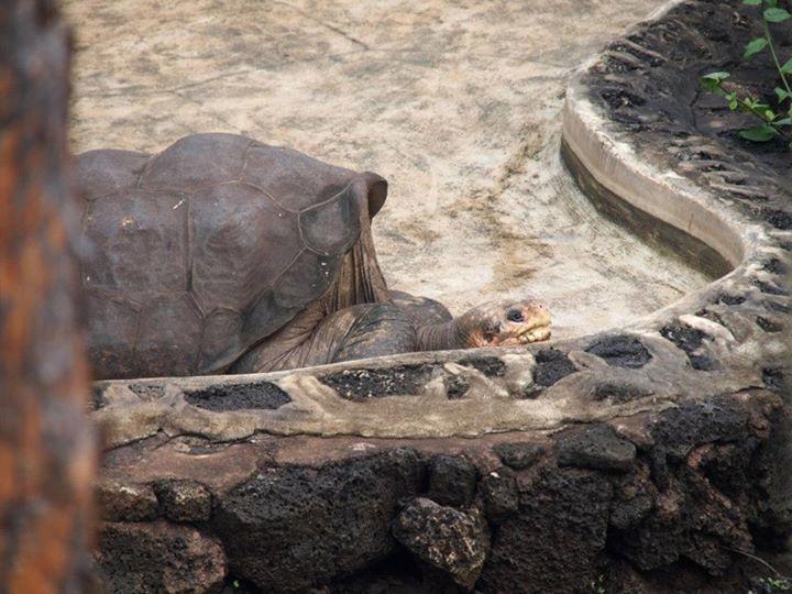 Einsamer-George-Schidkröte.jpeg