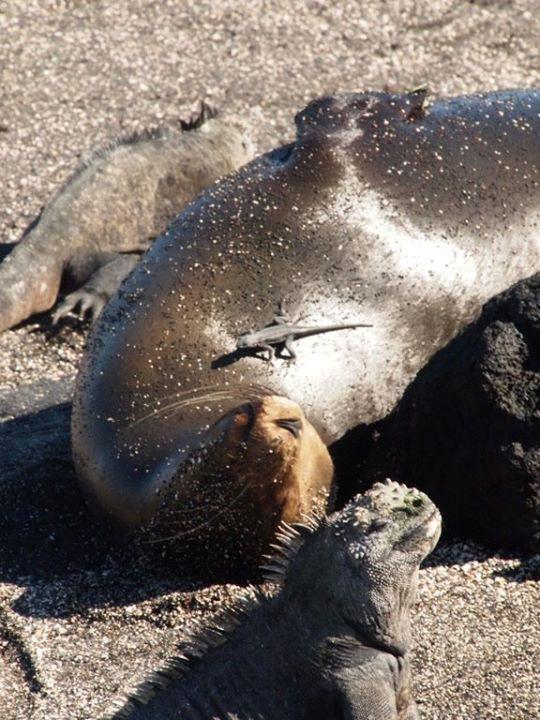 wpid-mntsdcardDCIMFacebookGalapagos-Tierwelt.jpeg.jpeg