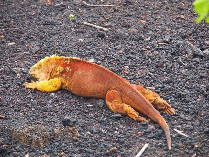Landechse-Galapagos.jpeg