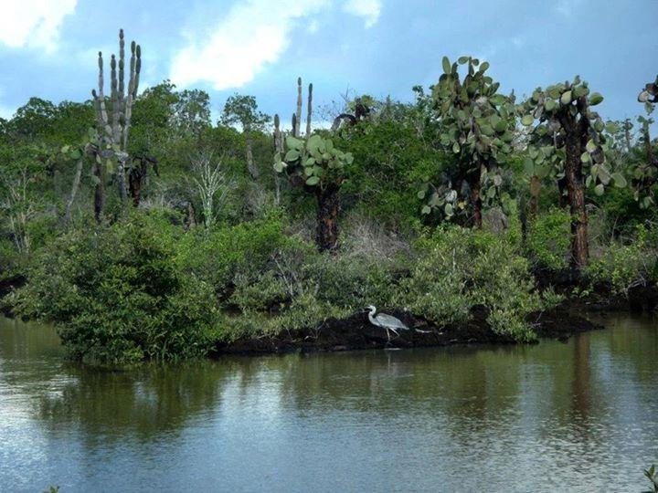 wpid-mntsdcardDCIMFacebookLas-grietas-Galapagos.jpeg.jpeg
