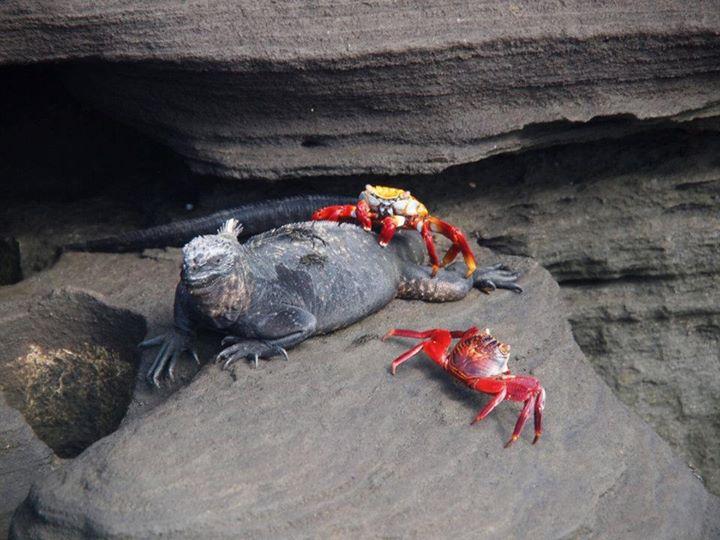 wpid-mntsdcardDCIMFacebookPuerto-Egas-Galapagos.jpeg.jpeg