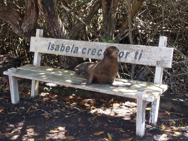 wpid-mntsdcardDCIMFacebookRobben-Isabela-Galapagos.jpeg.jpeg