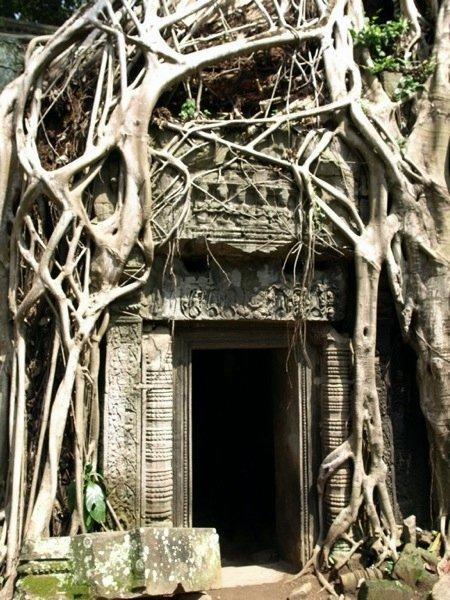 Angkor Baum