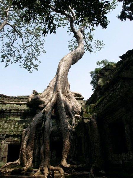 Angkor Wat Ruinen
