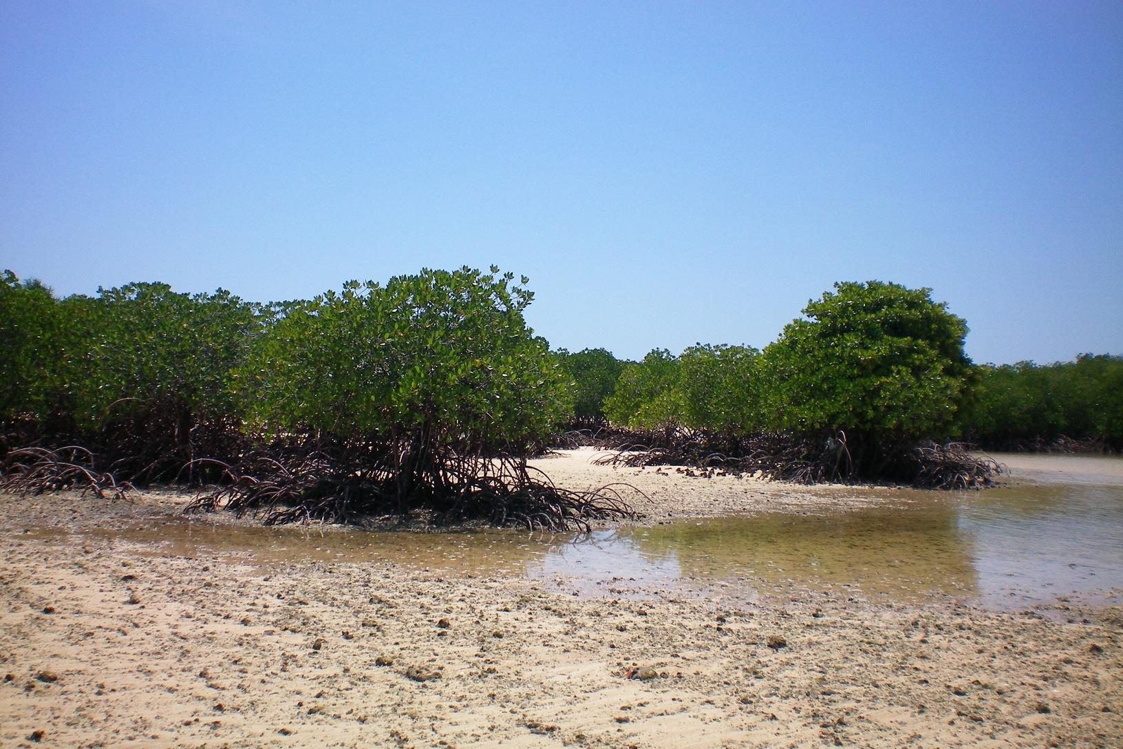 Bali Mangroven