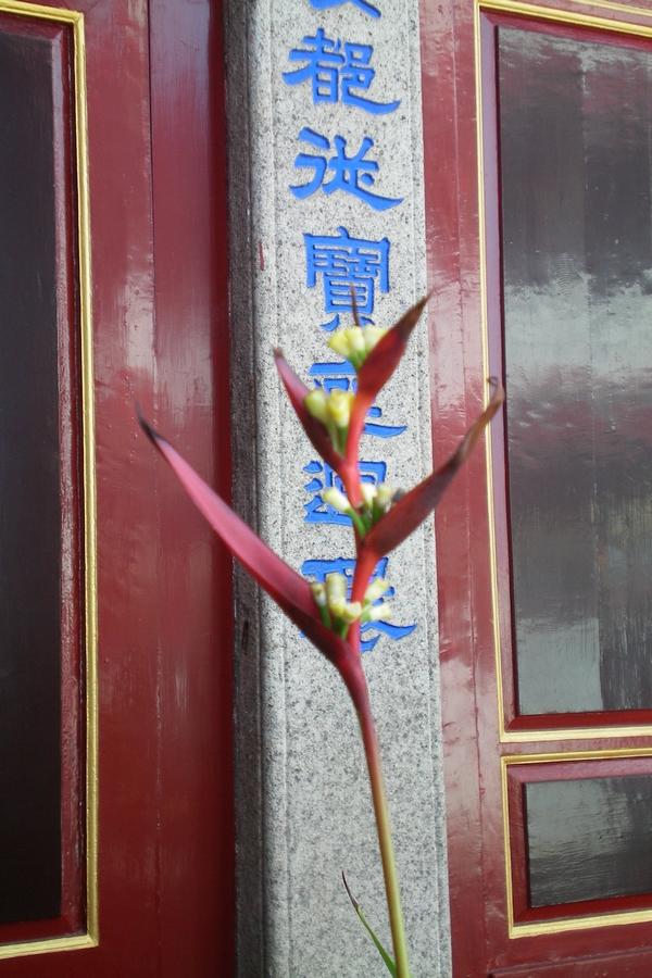 Blume Tempel