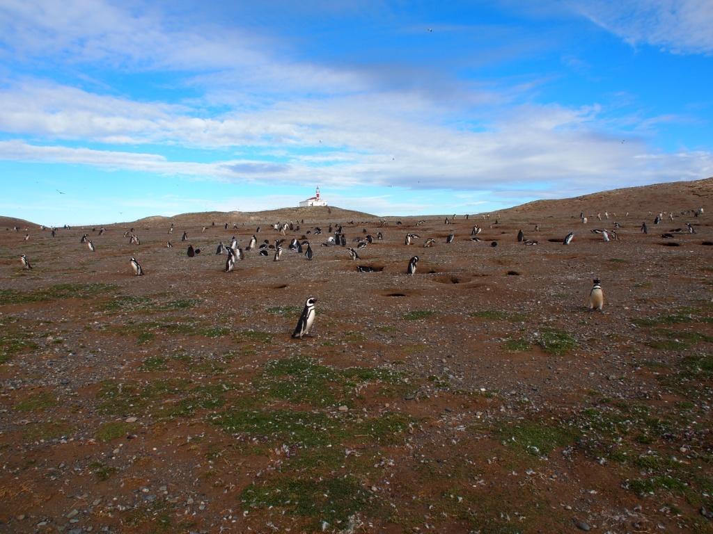 pinguinkolonie isla magdalena
