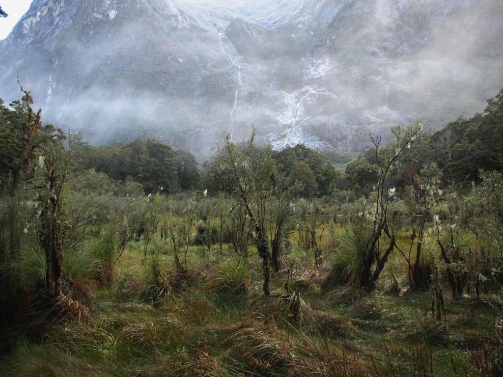 Nebel milford track