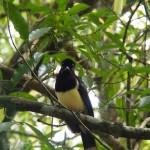 vogel iguazu