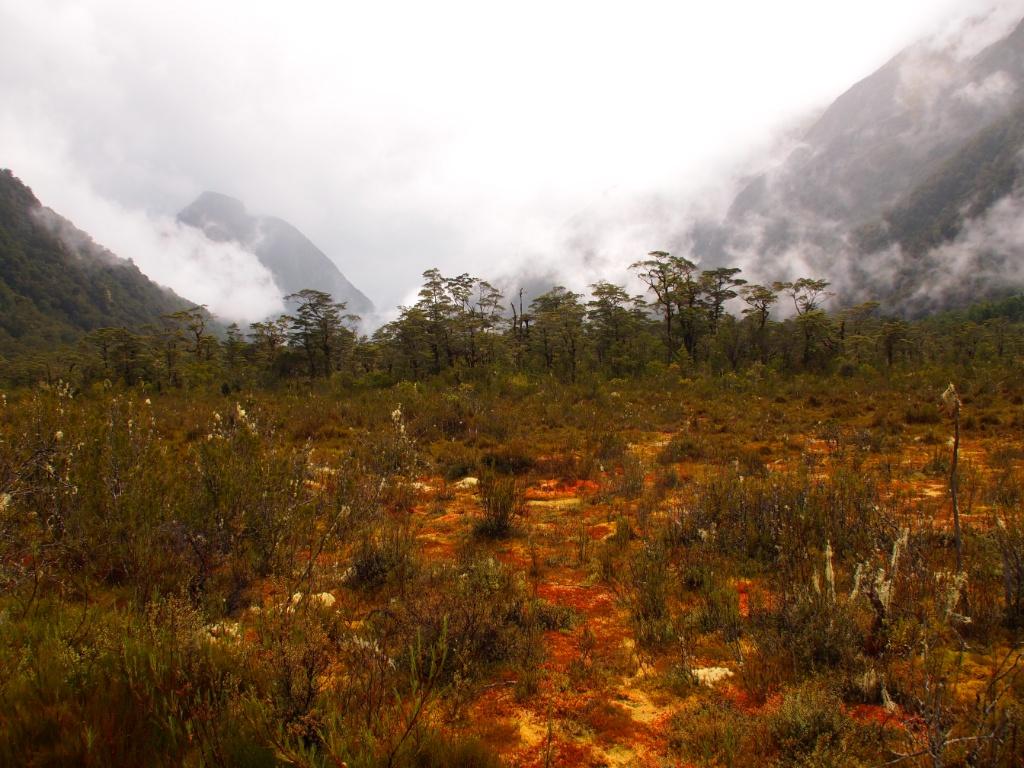 Sumpfgebiet weltreise