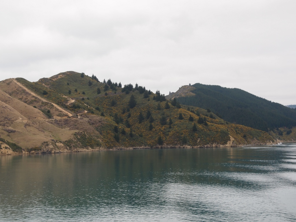 Picton nach wellington