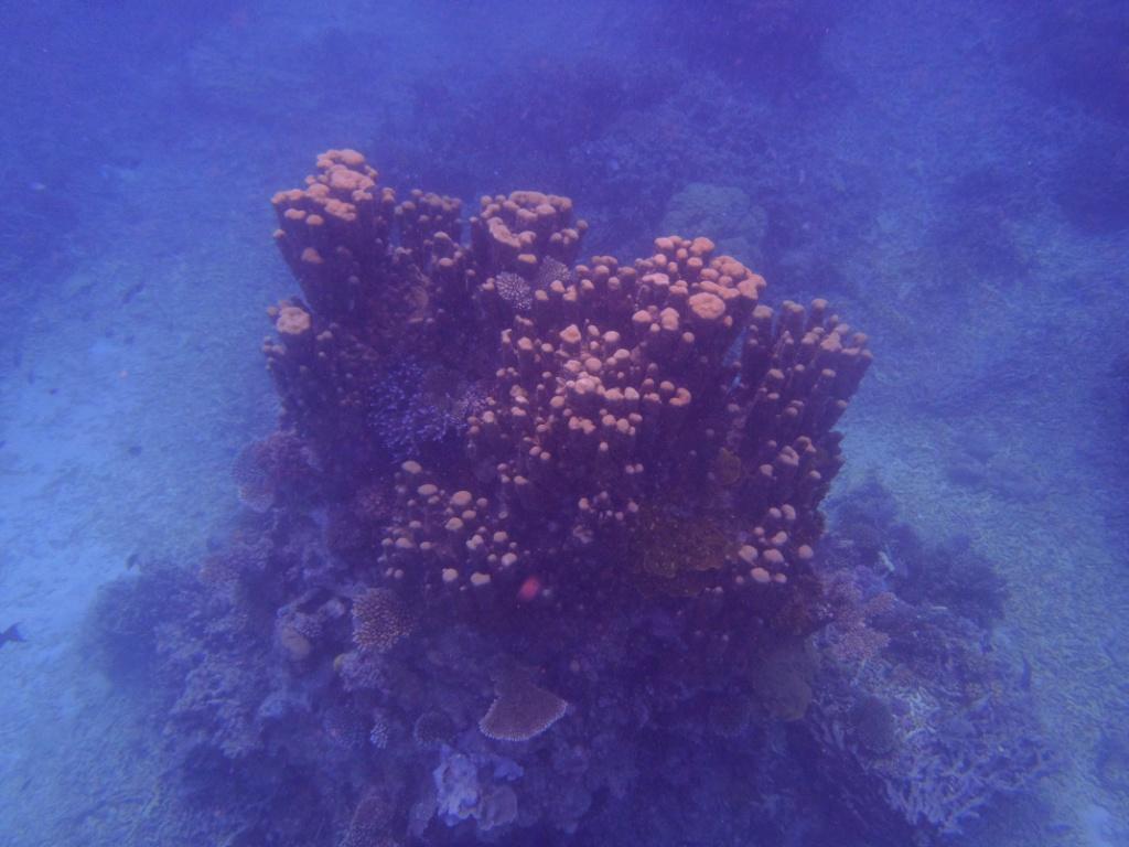 fische great barrier reef
