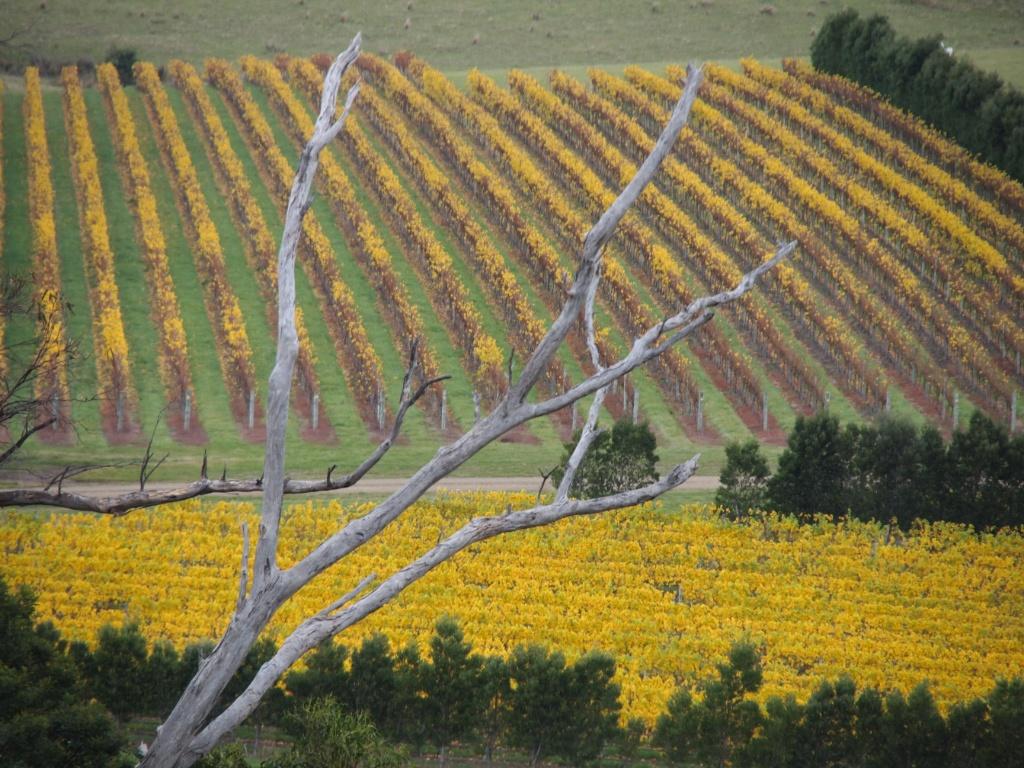 Weinanbau tasmanien