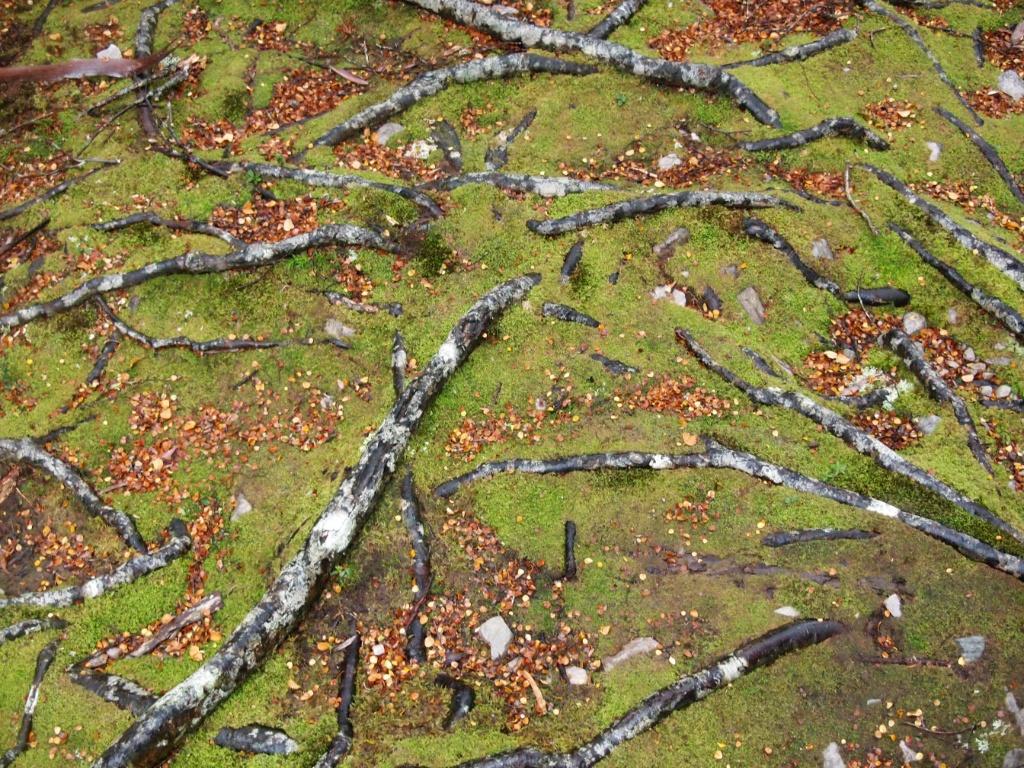 moos-regenwald-australien