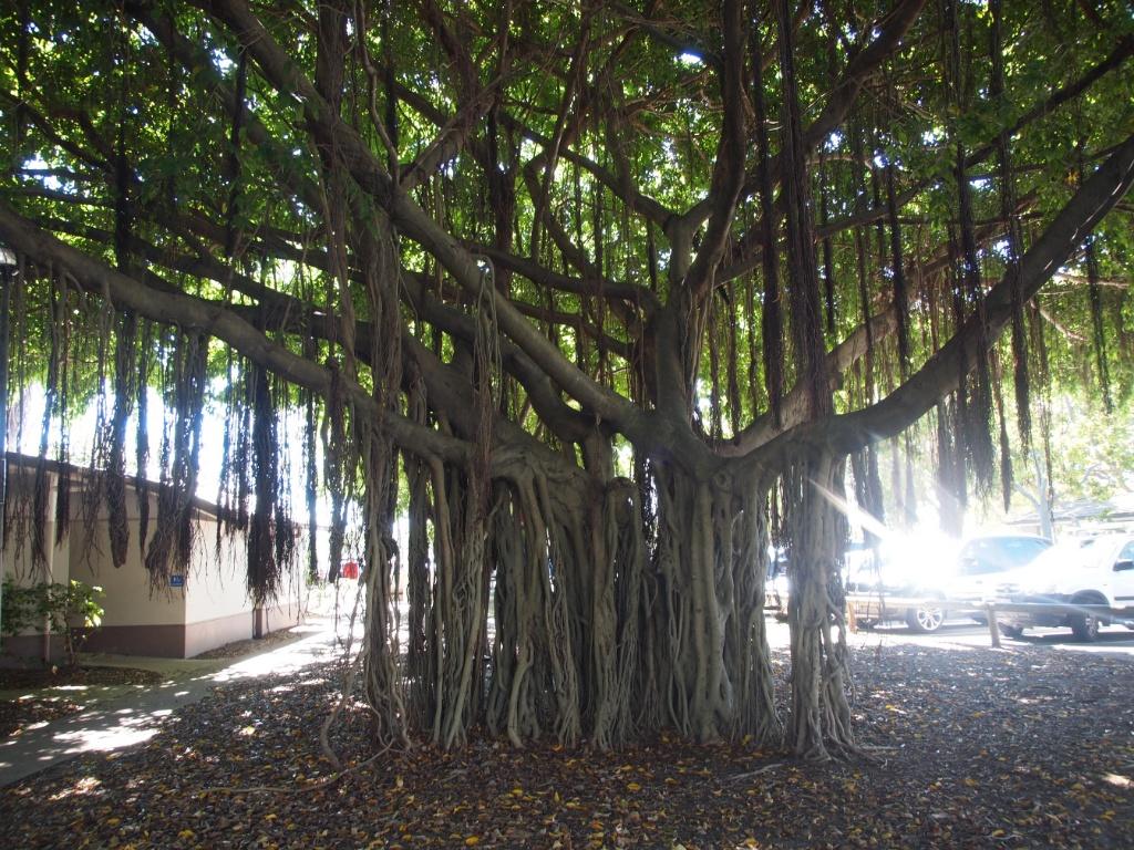 Riesenbaum weltreise