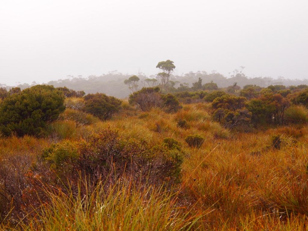 tasmanien buschland