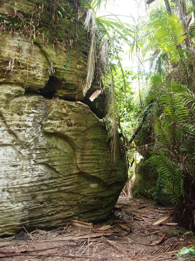 Pfad regenwald borneo