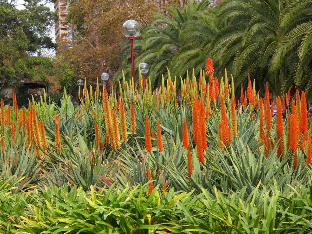 sydney botanischer garten