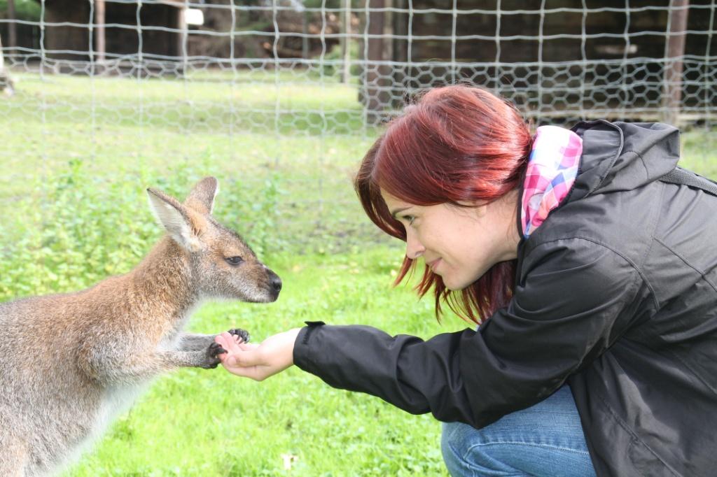 wallaby fütterung