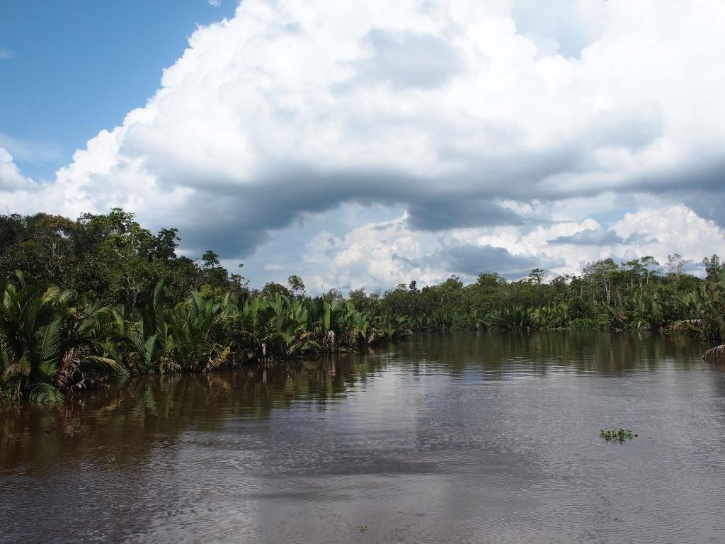 Fluss kumai