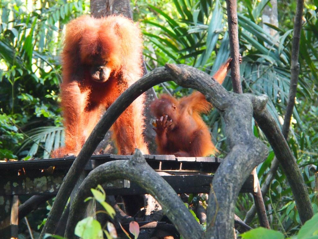 Futter-Affen