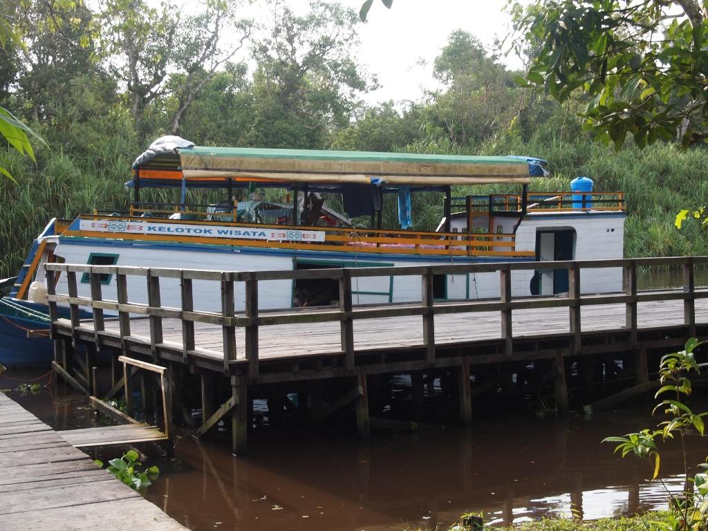 Klotok hausboot orangutans