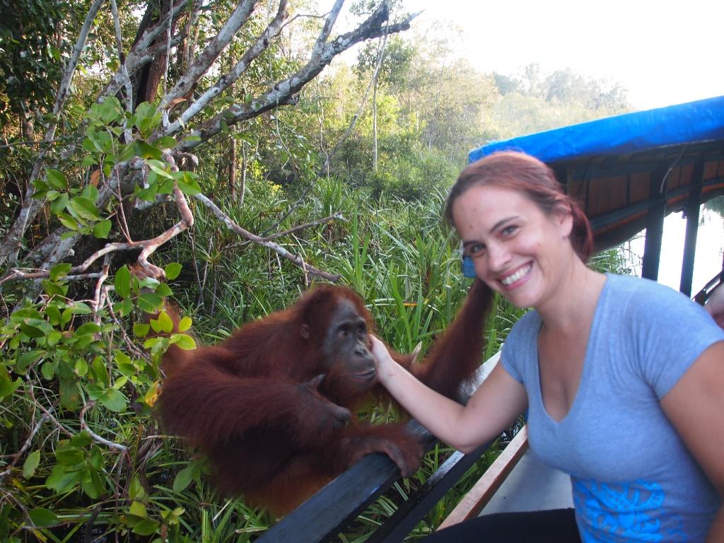 weltreise orangutan