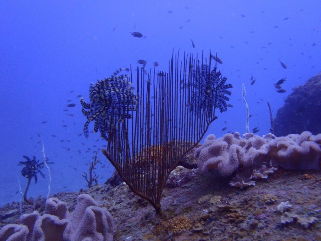 koralle-perhentian-T3