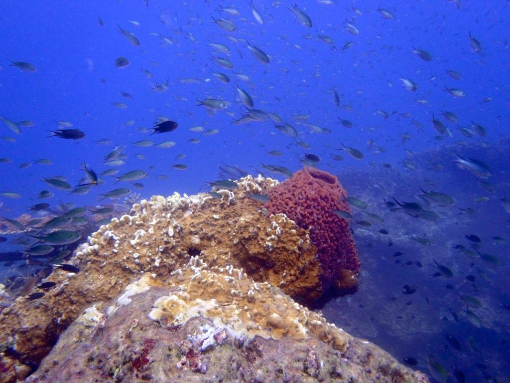 korallenriff-malaysia