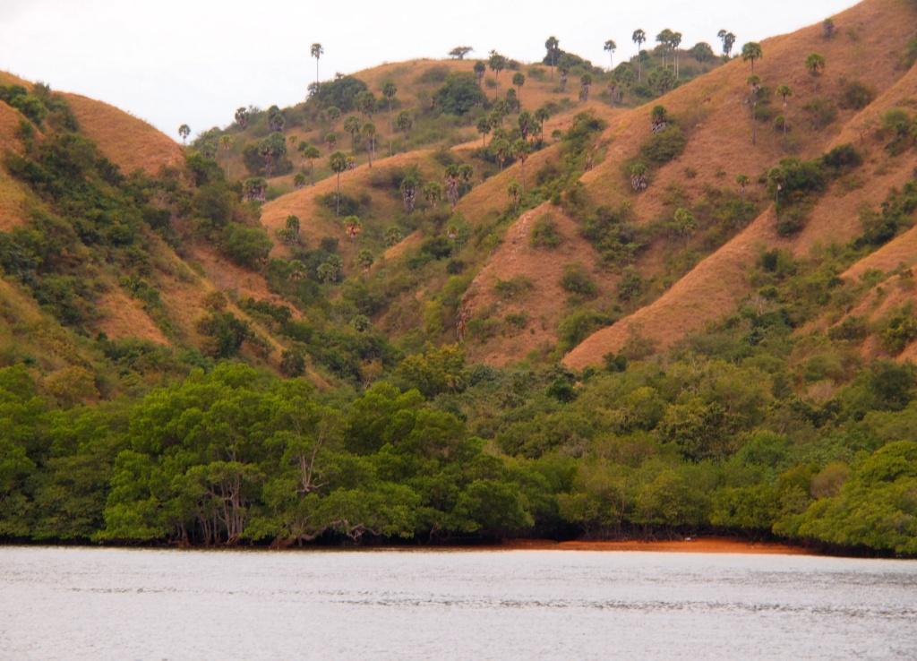 rinca island komodo nationalpark