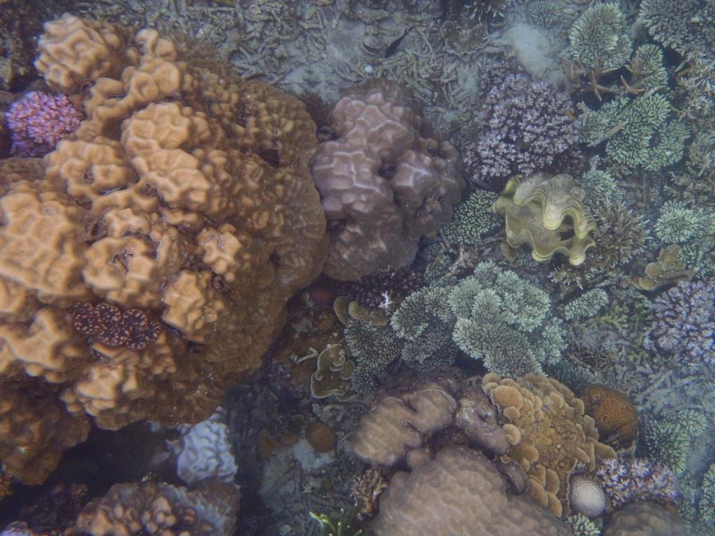 korallengarten-perhentian